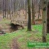Muszkowicki Las Bukowy - mostek nad potokiem.
